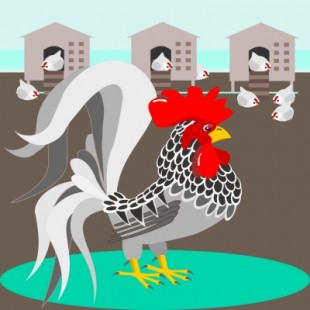 """Grey Rooster With Nest"". Image: debspoons/FreeDigitalPhotos.net"