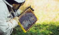 Flying Towards the Beehive: The Estonian Apiculture Industry