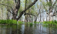 "Chasing Estonia's ""Fifth Season"" in Ontario's Minesing Wetlands"